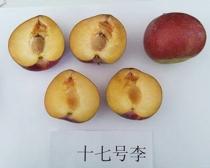 阜新国峰十七李子